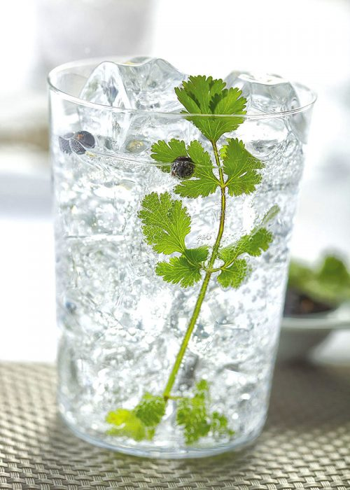 Ging tonic de cilantro